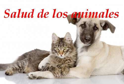 el cuidado de los animales domesticos y salvajes
